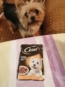 Корм консервированный Cesar, для взрослых собак, с курицей и зелеными овощами в соусе, 28 шт по 85 г #2, Наталья Б.