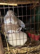 Кормовая добавка для животных и птиц Реасил (Reasil Humic Health) дойпак 1 кг #8, Екатерина И.