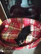 Мягкий лежак Лежак для собак с бортиком № 9, шотландка красная, 105 х 69 х 24 см #1, Гиндинсон Валерия
