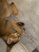Игрушки для животных Hexbug Мышка интерактивная серая #3, Шарова Мария