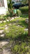 Профессиональный жидкий газон HydroSeed 7-в-1 #8, Наумова Марина