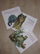 Древние животные нашей планеты. Палеонтология в картинках #9, Роман Николаевич