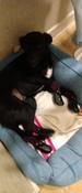 Прорезиненные теплые носки для собак Грызлик Ам, Цвет Фиолетовый, Размер XL (A-50мм, B-60мм, C-40мм, D-120мм) #11, Елена Харитонова
