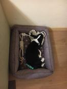Лежанка для животных Bedfor со съемными чехлами, цвет Мокко, размер 70 х 50 см #5, Анастасия М.