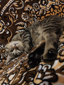 """Лакомство для взрослых кошек """"Dreamies"""", подушечки с курицей, 140 г #12, Анастасия К."""