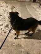 Прорезиненные теплые носки для собак Грызлик Ам, Цвет Фиолетовый, Размер 3XL (A-66мм, B-80мм, C-50мм, D-150мм) #2, Виктория Л.