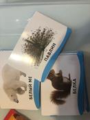 Росмэн Обучающие карточки Животные #7, Лаврентьева Наталья