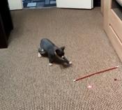 Лазерная указка (фонарик+ультрафиолет) игрушка для кошки с карабином, красный. #13, Юлия