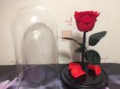 Букет из стабилизированных цветов Notta & Belle Роза, 26 см, 753 гр #14, Александр В.