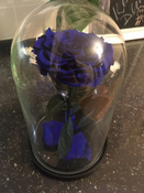 Стабилизированные цветы в стекле Notta & Belle Роза, 26 см, 753 гр #11, Татьяна С.
