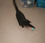 Интерактивная игрушка для кошек PetLeon Вращающийся на 360 градусов мяч USB заряжаемый светодиодная подсветка #4, Наталья