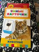 Росмэн Обучающие карточки Животные #14, Александра Демакова