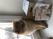 """Консервы Royal Canin """"British Shorthair Adult"""", для кошек британской породы старше 12 месяцев, мелкие кусочки в соусе, 85 г, 12 шт #5, ольга к."""