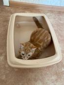 Туалет для кошек PetTails глубокий, большой (под наполнитель) 50*38*13см, бежевый #5, Ольга С.