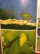 Моя большая книга о животных   Куйе Наталья #14,  Наталья