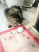 Интерактивная игрушка для кошек PetLeon Вращающийся на 360 градусов мяч USB заряжаемый светодиодная подсветка #11, Мария Г.