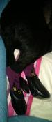 Прорезиненные теплые носки для собак Грызлик Ам, Цвет Фиолетовый, Размер XL (A-50мм, B-60мм, C-40мм, D-120мм) #9, Елена Харитонова