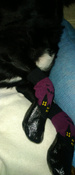Прорезиненные теплые носки для собак Грызлик Ам, Цвет Фиолетовый, Размер XL (A-50мм, B-60мм, C-40мм, D-120мм) #10, Елена Харитонова