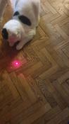 Лазерная указка (фонарик+ультрафиолет) игрушка для кошки с карабином, синий. #4, Наталья Н.