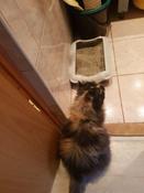 Туалет ( лоток ) с бортом , 40*27*11 см, серый #2, Ольга К.