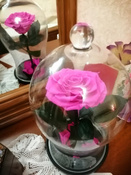Долговечная стабилизированная роза в стеклянной колбе Premium X  - Notta & Belle #5, игорь е.