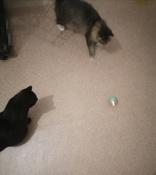Интерактивная игрушка для кошек PetLeon Вращающийся на 360 градусов мяч USB заряжаемый светодиодная подсветка #6, Наталья