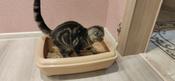 Туалет для кошек PetTails глубокий, большой (под наполнитель) 50*38*13см, бежевый #9, Девяшина Юлия