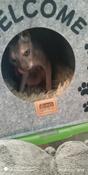 "Домик для животных Eva ""Будка WELCOME"", войлок, 33х33х45см #4, Tatiana P."