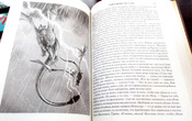 Пламя и кровь (с илл. Дага Уитли) | Мартин Джордж Рэймонд Ричард #13, Ирина Х.
