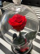 Долговечная стабилизированная роза в стеклянной колбе Premium X  - Notta & Belle #4, Екатерина