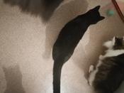 Интерактивная игрушка для кошек PetLeon Вращающийся на 360 градусов мяч USB заряжаемый светодиодная подсветка #3, Наталья