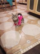 Толстовка с капюшоном для собак и кошек, Цвет: Розовый, Размер: M #6, Маргарита Б.