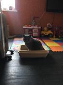 Туалет для кошек PetTails глубокий, большой (под наполнитель) 50*38*13см, бежевый #12, Анастасия А.