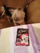 Корм консервированный Cesar, для взрослых собак, с говядиной и овощами в соусе, 28 шт по 85 г #2, Наталья Б.