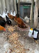 Кормовая добавка для животных и птиц Реасил (Reasil Humic Health) дойпак 1 кг #10, Екатерина И.