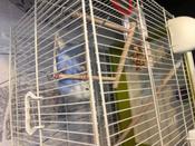 Клетка для птиц VOLTREGA (641), белый/зеленый, 39х25.5.х45см #1, Алена С.