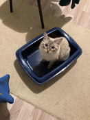 Туалет для кошек PetTails глубокий, большой (под наполнитель) 50*38*13см, синий #11, Наташа Я.