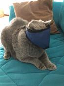 Намордник ( нейлоновый) для кошек L #4, Екатерина П.