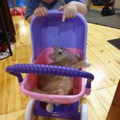 """Полесье коляска для кукол """"Arina"""" 4-х колёсная в пакете #2, Наталья Ш."""