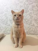 """Медальон-адресник """"Trixie"""", для кошек, цвет: серебристый #3, Айза"""