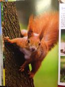 Моя большая книга о животных   Куйе Наталья #15,  Наталья