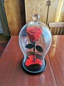 Долговечная стабилизированная роза в стеклянной колбе Premium X  - Notta & Belle #1, Денис Ш.