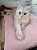 "Корм сухой Royal Canin ""British Shorthair Adult"", для британских короткошерстных кошек старше 12 месяцев, 2 кг #3, Салмина Галина Геннадьевна"