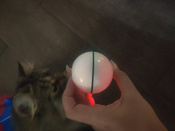 Интерактивная игрушка для кошек PetLeon Вращающийся на 360 градусов мяч USB заряжаемый светодиодная подсветка #7, Мария Г.