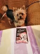 Корм консервированный Cesar, для взрослых собак, с тушеной телятиной и овощами в желе, 28 шт по 85 г #2, Наталья Б.
