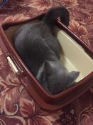 "Туалет для кошек DD Style ""Догуш"", с бортом, цвет: коричневый, бежевый, 32,5 х 43 х 15,5 см #14, Мария Б."