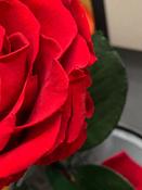 Букет из стабилизированных цветов Notta & Belle Роза, 26 см, 753 гр #8, Мария К.