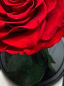 Букет из стабилизированных цветов Notta & Belle Роза, 26 см, 753 гр #7, Мария К.