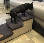 Лестница для собак прикроватная, складываемая, с отсеками для хранения #7, Анастасия Л.
