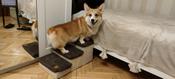 Лестница для собак прикроватная, складываемая, с отсеками для хранения #2, Александр С.